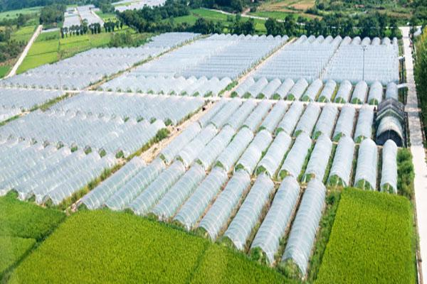 Plastic Greenhouses in China